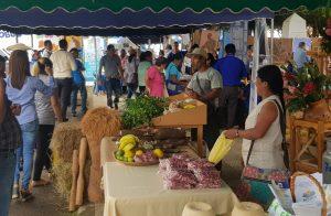 Productores de porotos en Santa Fé, temen pérdidas por la falta de comercialización.