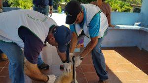 MINSA, realiza jornada de vacunación contra la rabia en animales domésticos.