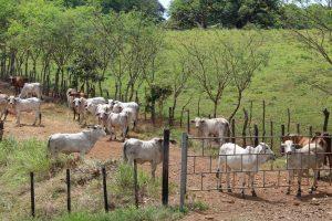 Se registra un caso de rabia bovina en Mariato al sur de Veraguas.